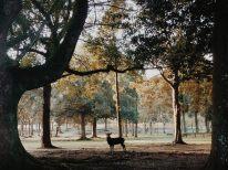 parco-di-nara-al-mattino