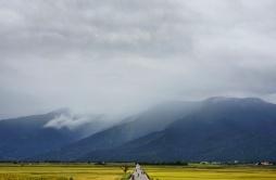 campi-di-riso