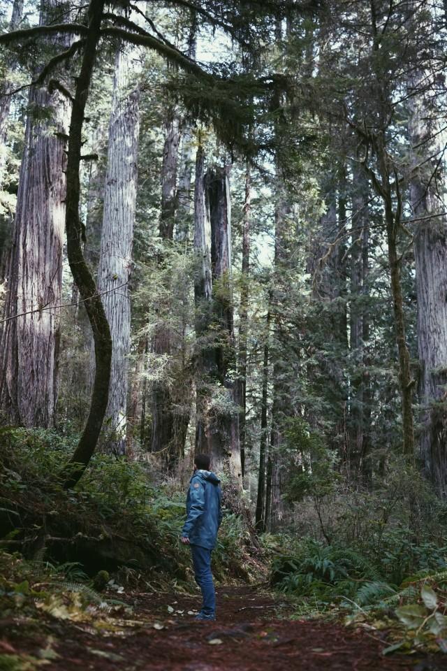 Jacket Redwoods